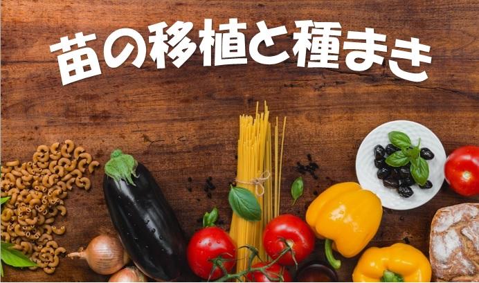 夏野菜の苗をポットに移植&トマトの種まき
