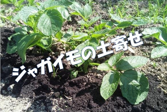 ジャガイモの土寄せと4月22日の畑の様子