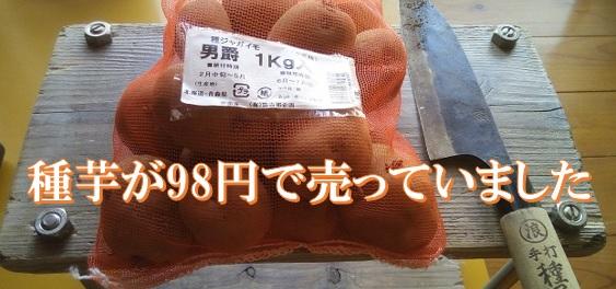 男爵芋の種芋が驚きの値段で売っていたので思わず購入。