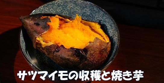 サツマイモの収穫からの焚き火で焼き芋。
