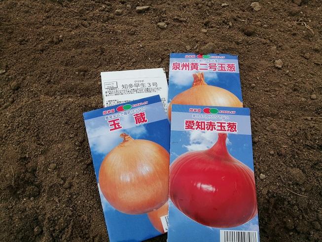 台風15号の被害、玉ねぎの種まきとキャベツ・白菜の定植