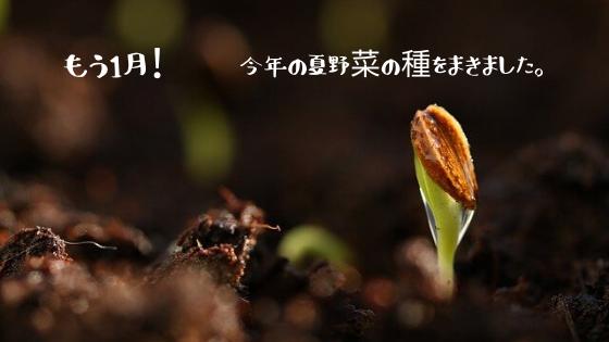 もう1月!今年の夏野菜の種を蒔きました。