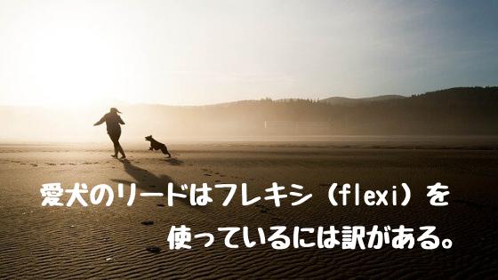 愛犬のリードはフレシキ(flexi)を使っている訳