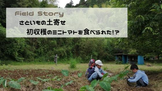 Field Story さといもの土寄せ 初収穫にミニトマトを食べられた