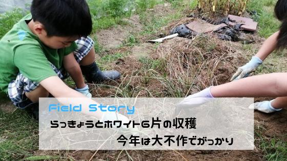 Field Story らっきょうとホワイト6片の収穫