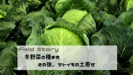 Field Story 冬野菜の種まきとサトイモの土寄せ