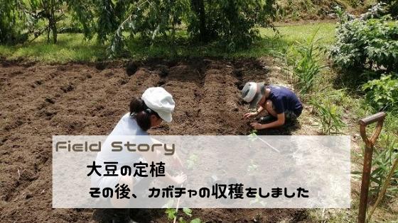 Field Story 大豆の定植とカボチャを収穫しました。
