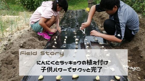 Field Story にんにくとラッキョウの植え付けをしました。