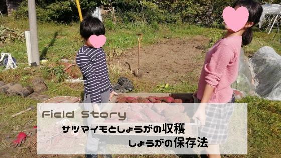 Field Story サツマイモとしょうがの収穫&しょうがの保存法