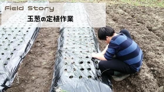 Field Story 玉葱の定植作業