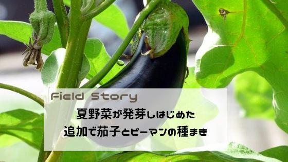 Field Story 夏野菜が発芽しはじめた。追加で茄子とピーマンの種まき