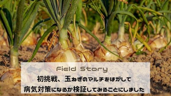 Field Story 初挑戦、玉ねぎのマルチをはがして病気対策になるか検証