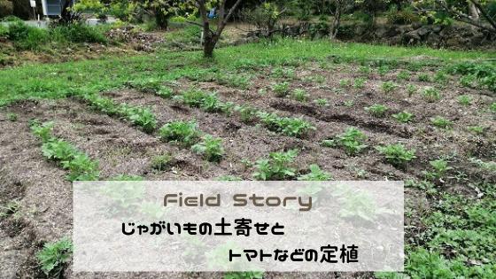 Field Story じゃがいもの土寄せとトマトなどの定植