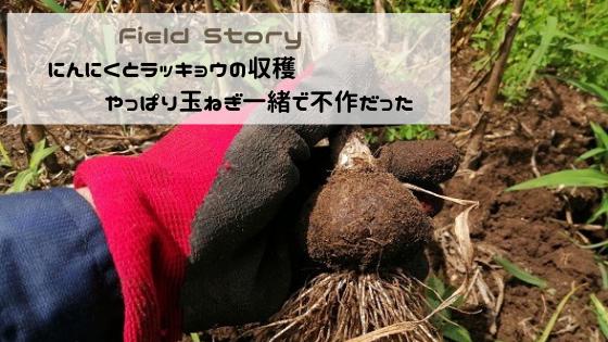 Field Story にんにくラッキョウの収穫 やっぱり玉ねぎと一緒で不作だった