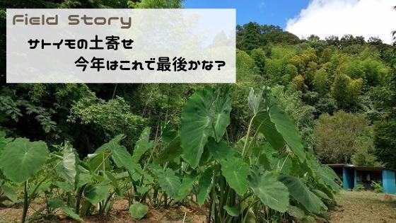FieldStory サトイモの土寄せ。今年はこれで最後かな?