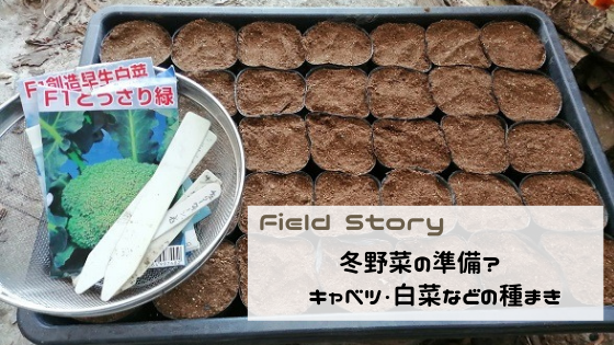 FieldStory 冬野菜の準備?キャベツ・白菜などの種まき