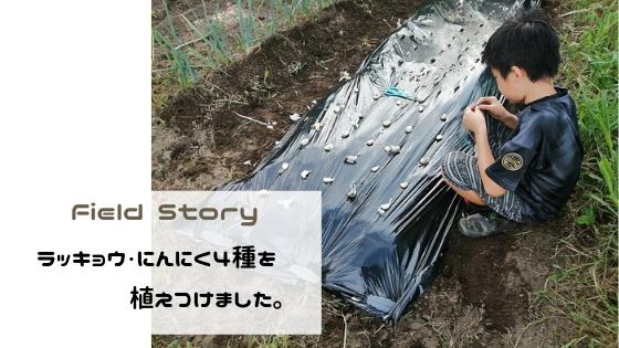 Field Story ラッキョウ・にんにく4種を植え付けしました。