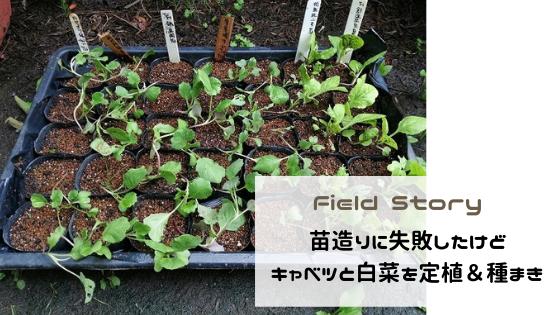 Field Story 苗造りに失敗したけどキャベツと白菜を定植&種まき