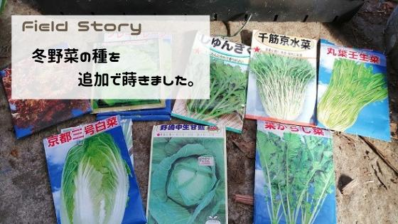 Field Story 冬野菜の種を追加で蒔きました。