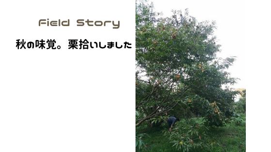 Field Story 秋の味覚。栗拾いをしました。