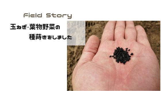 Field Story 玉ねぎ・葉物野菜の種蒔きをしました。